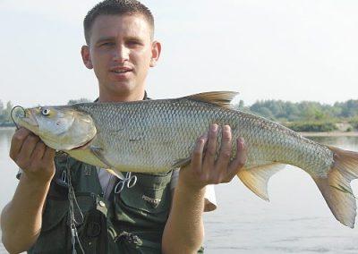 ryba103